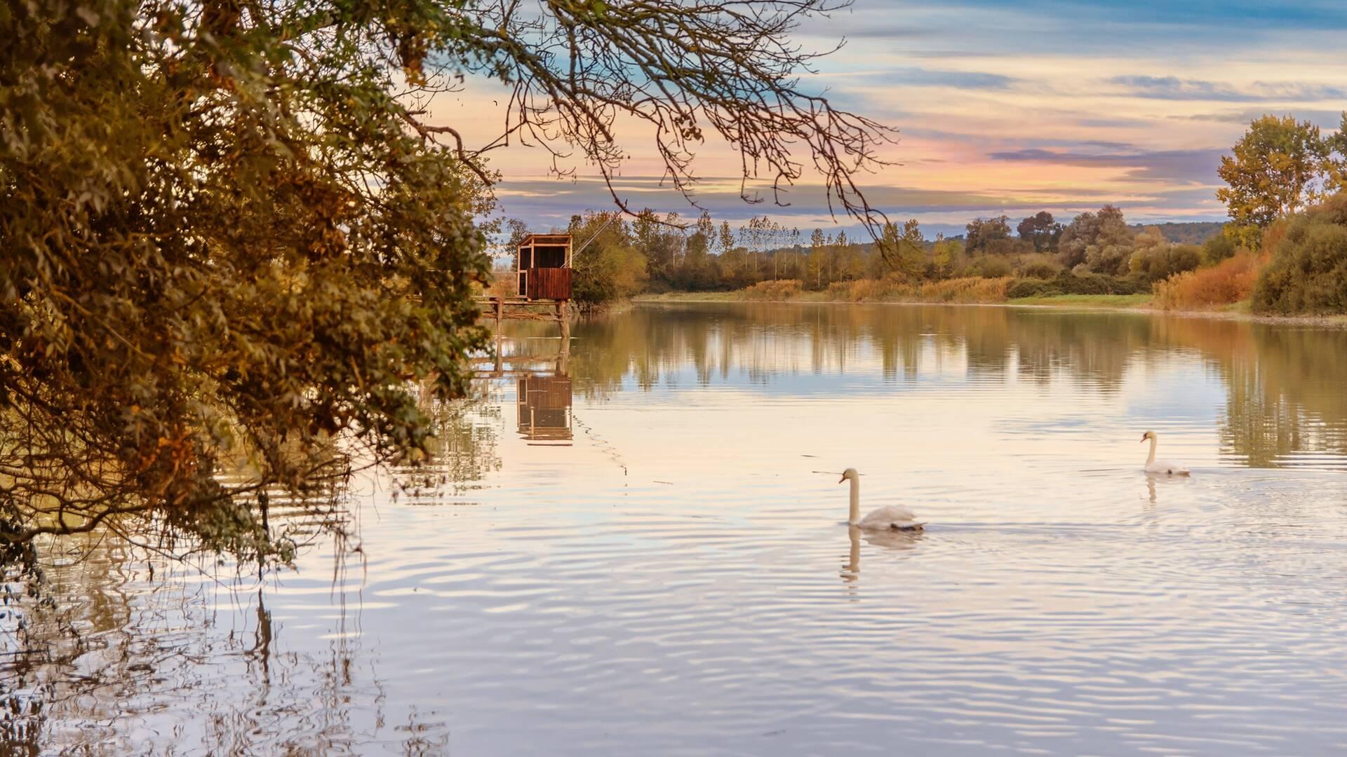 Observation d'oiseaux sur les réserves naturelles ©L.Pétillon