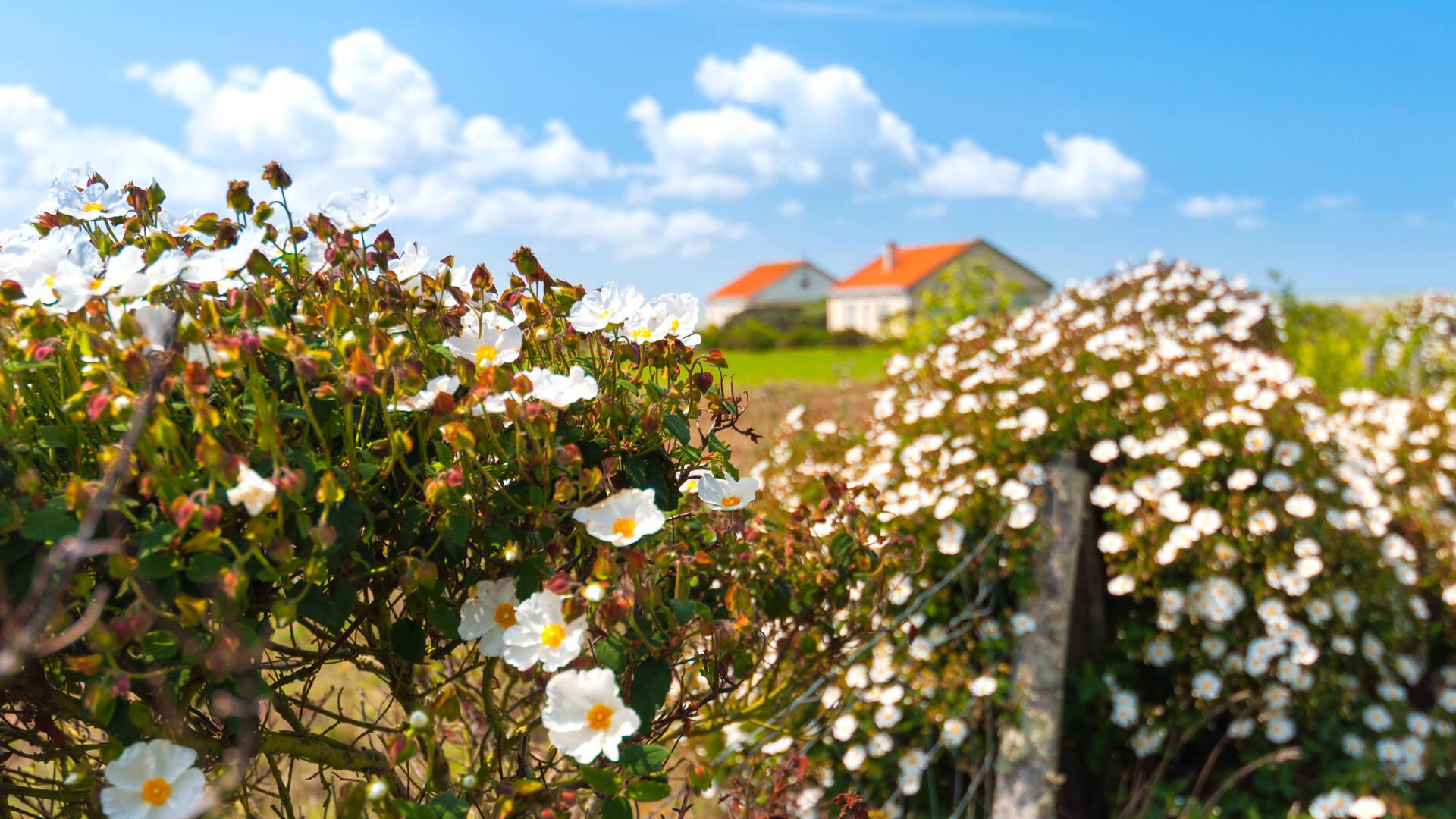 Randonnée Nature à l'île Madame - Rochefort Océan