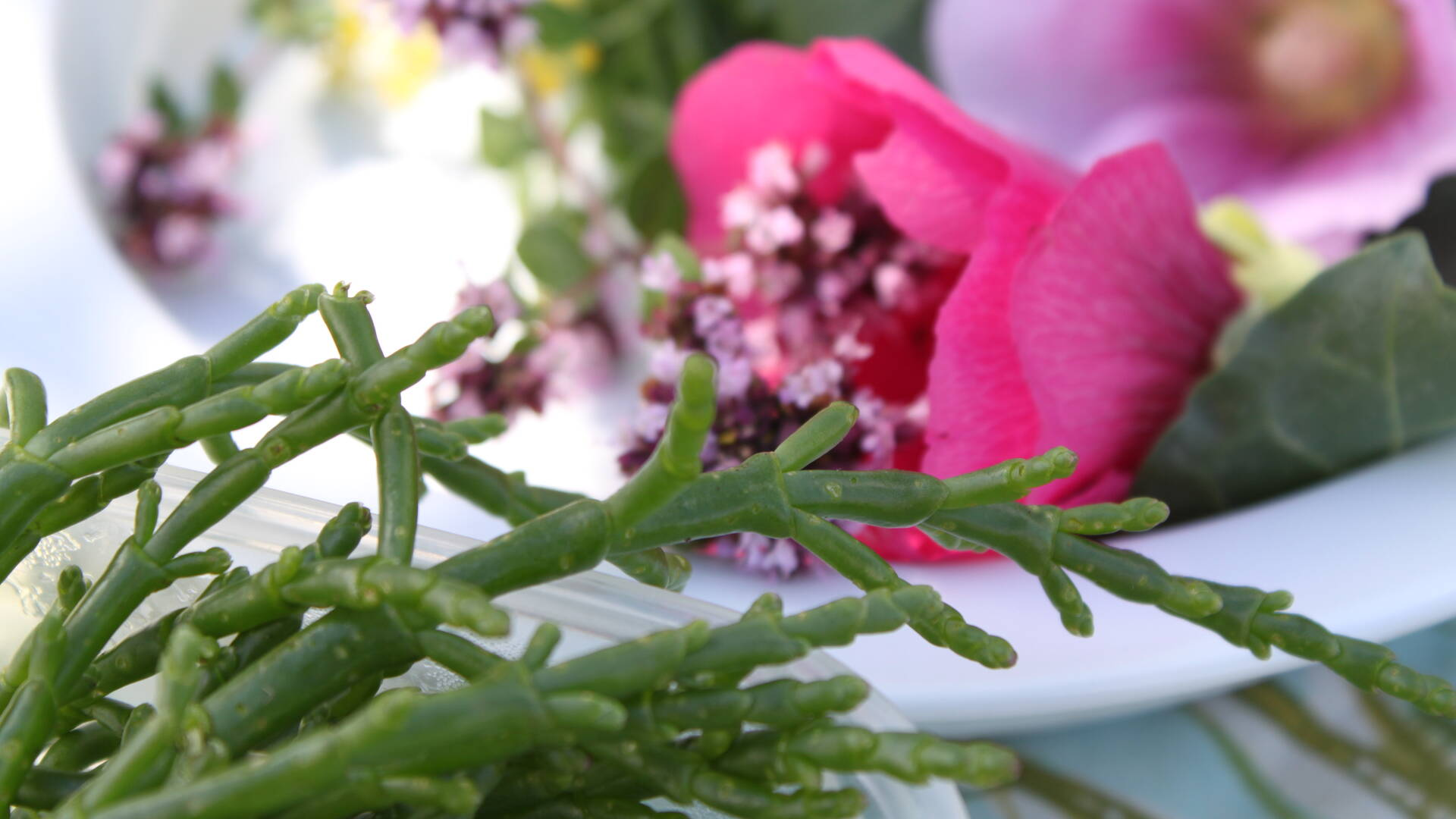 Assiette de salicorne ©C.Lacaud