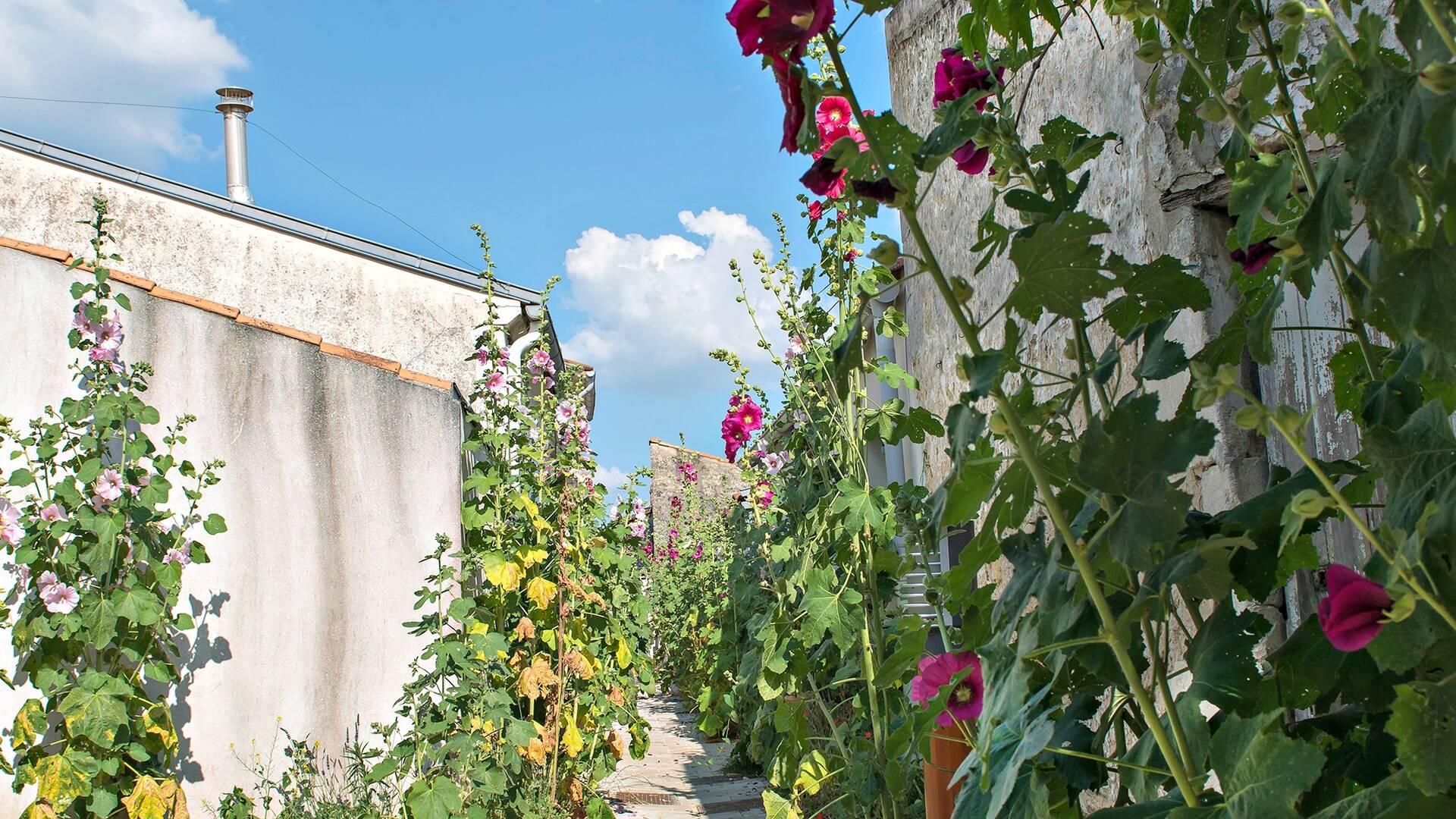 Charmantes ruelles bordées de roses trémières, quartier de la Coue à Fouras - © Marie-Françoise Boufflet