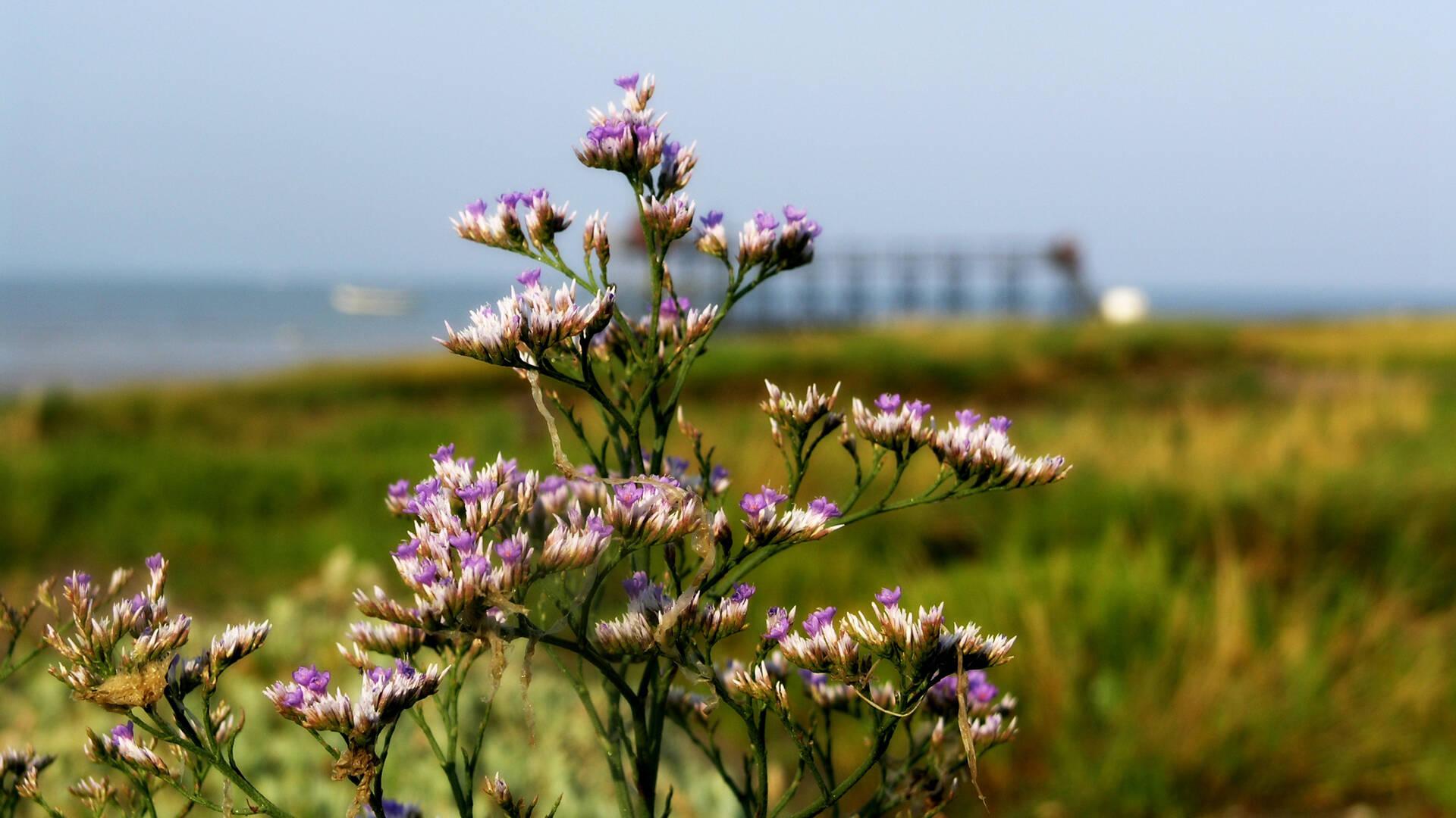 Fleurs et nature dans les marais © Christine Lacaud Office de Tourisme Rochefort Océan
