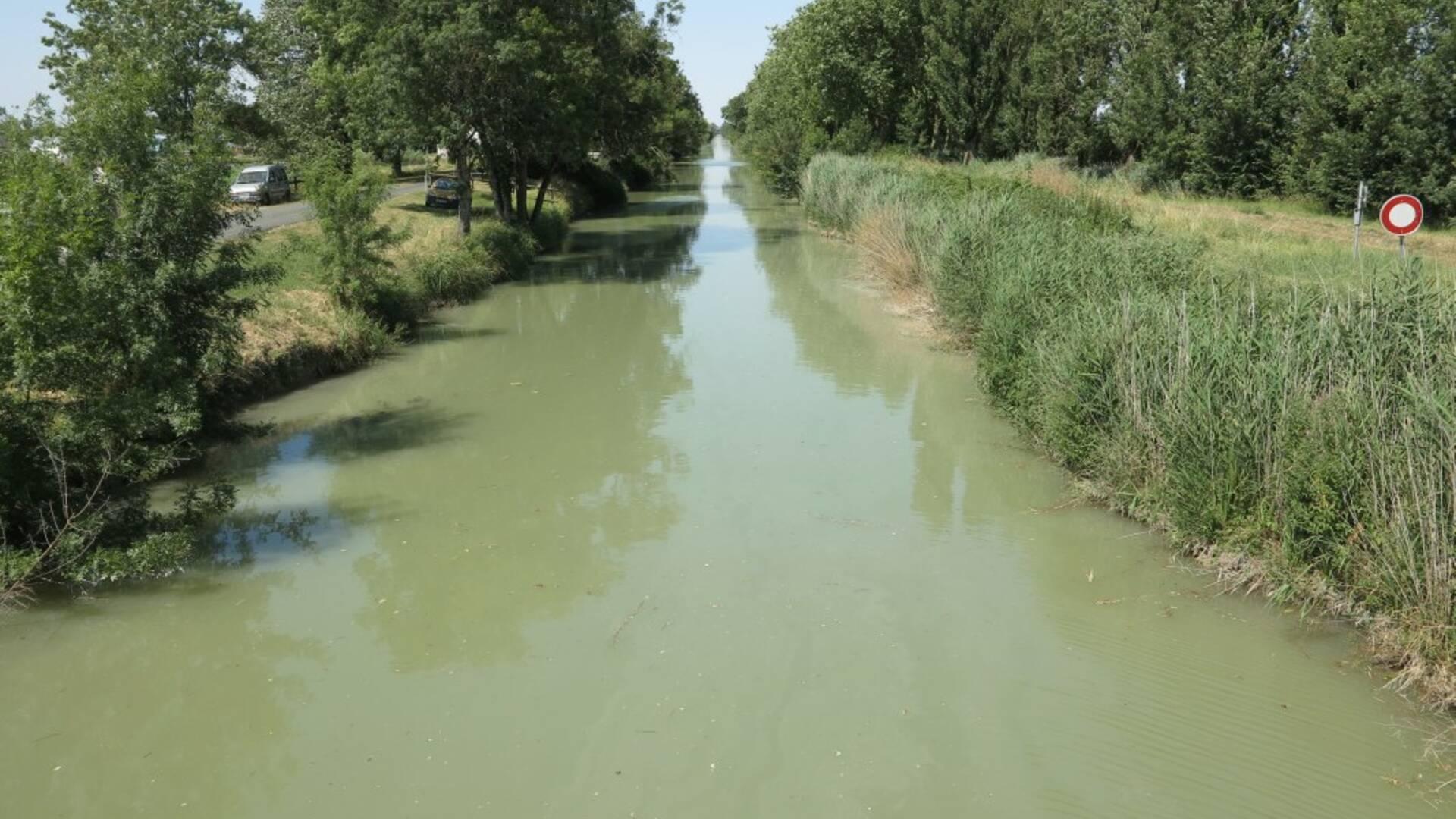 rochefort-ocean-peche-eau-douce-canal-charente-seudre © Fédération départementale pour la pêche et la protection du milieu aquatique