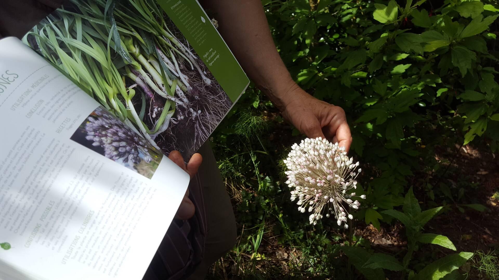 Apprendre à connaître les plantes©CE