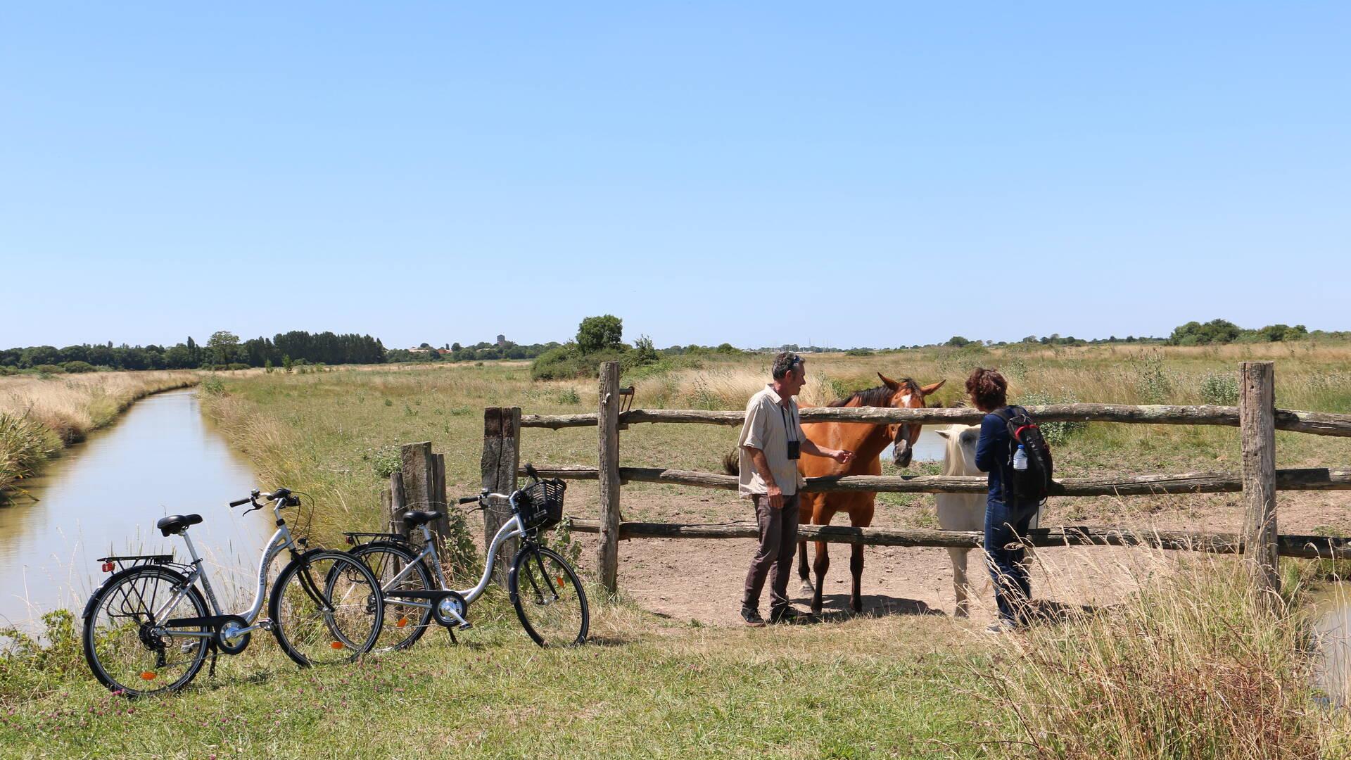 Vue sur les chevaux du marais