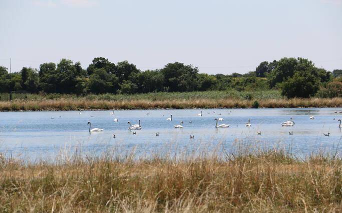 Partagez vos balades avec les oiseaux migrateurs !