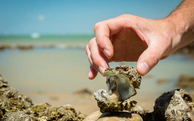 huître ouverte sur les parcs ©L.Pétillon