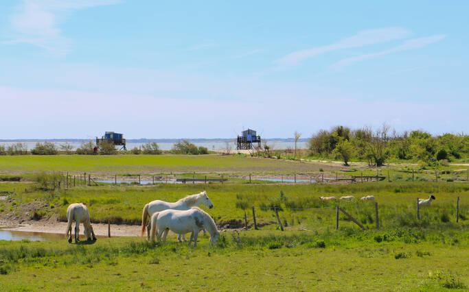 https://www.rochefort-ocean.com/sites/rochefort-ocean-tourisme/files/styles/laptop_rectangle/public/visuelpage/rochefort-ocean-ile-madame-chevaux.jpg?itok=UEhfYw1H