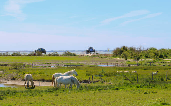 https://www.rochefort-ocean.com/sites/rochefort-ocean-tourisme/files/styles/laptop_rectangle/public/visuelpage/rochefort-ocean-ile-madame-chevaux.jpg?itok=vITEGZTi
