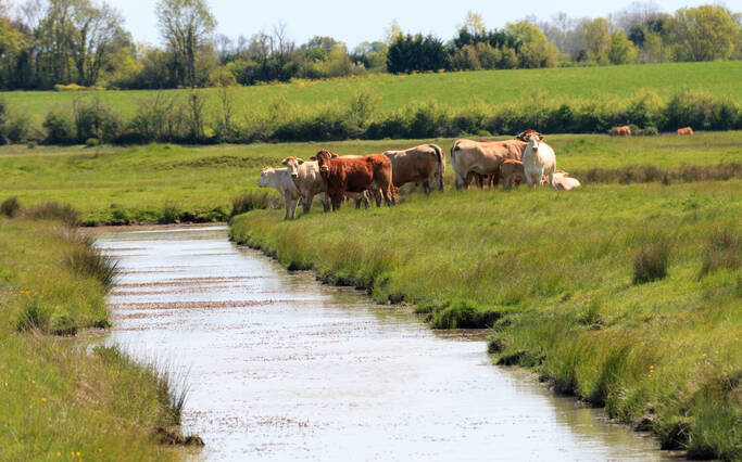 Leisure strolls through the marshes of Rochefort Ocean