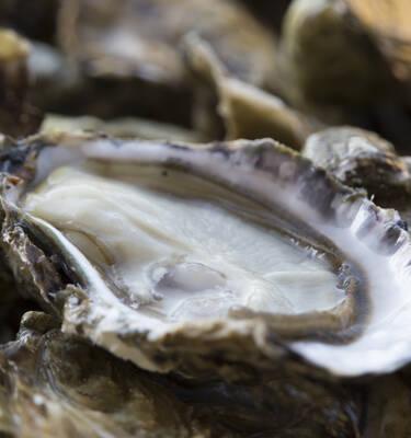 Les huîtres de Rochefort Océan © Simon David