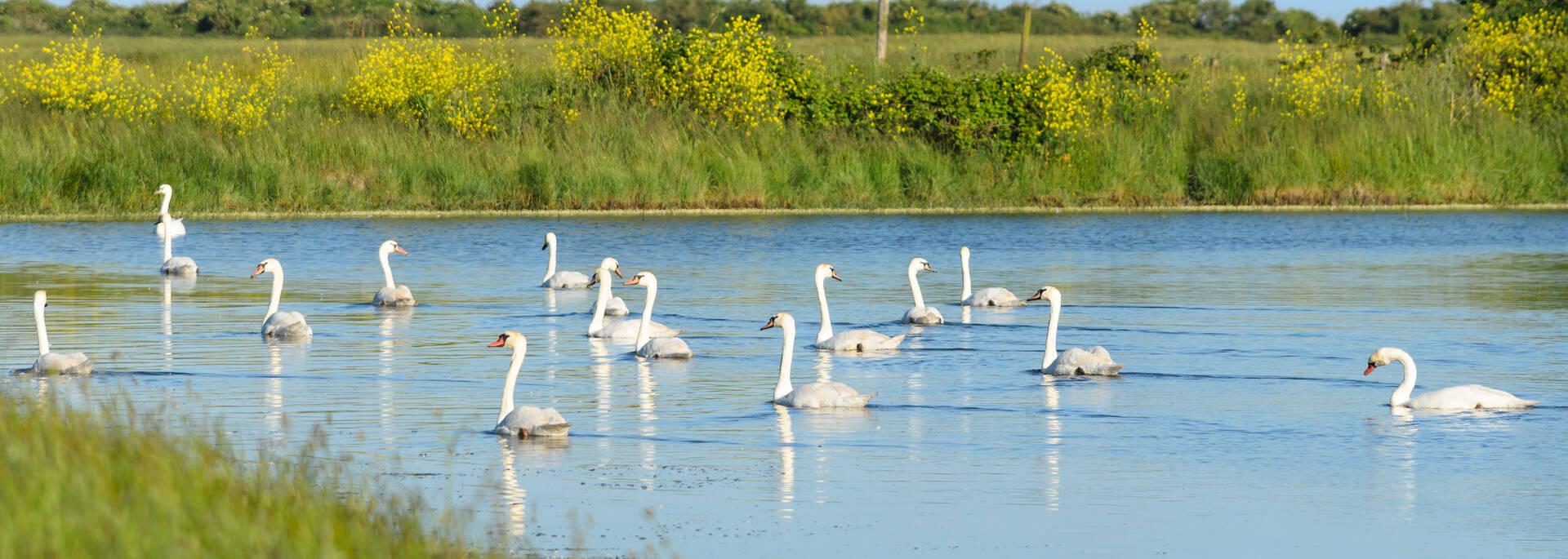 L'estuaire de la Charente, le paradis des oiseaux - © Dfred Photographie