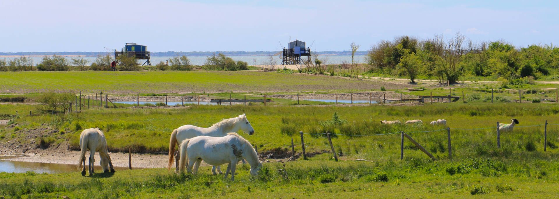 Horses of the Aquaculture Farm in Madame Island - © Office de tourisme Rochefort Océan