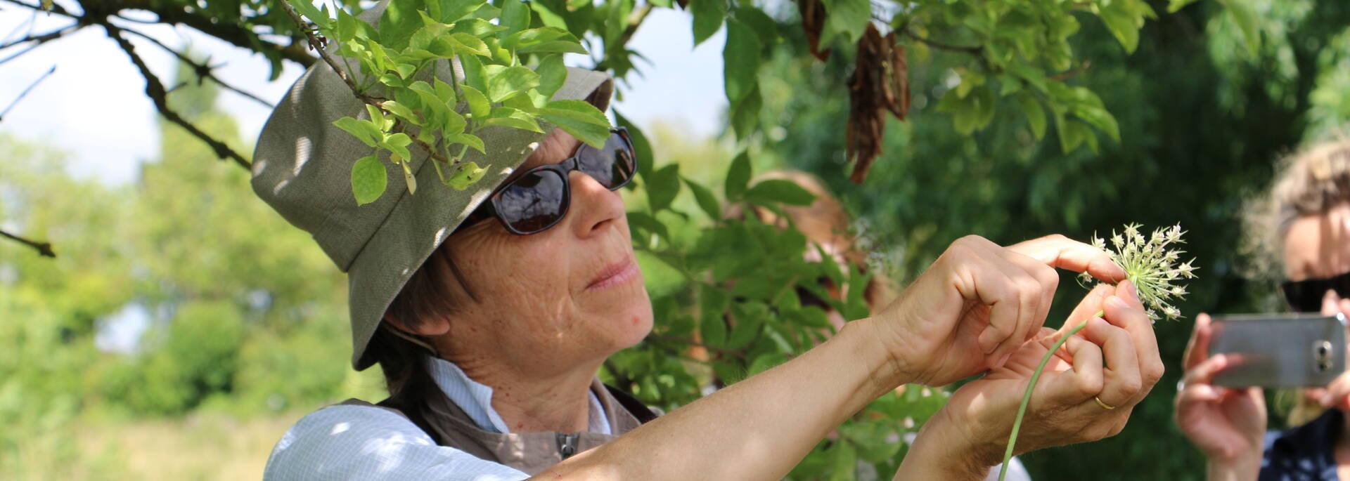 Sortie botanique avec Anne Richard, Fleur de Marée - © Office de tourisme Rochefort Océan