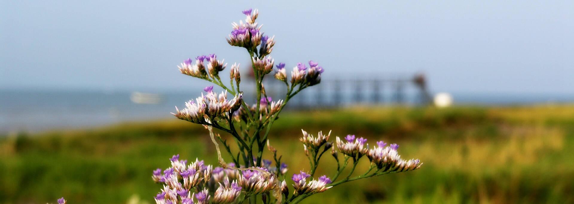 La flore de l'estuaire de la Charente - © Office de tourisme Rochefort Océan