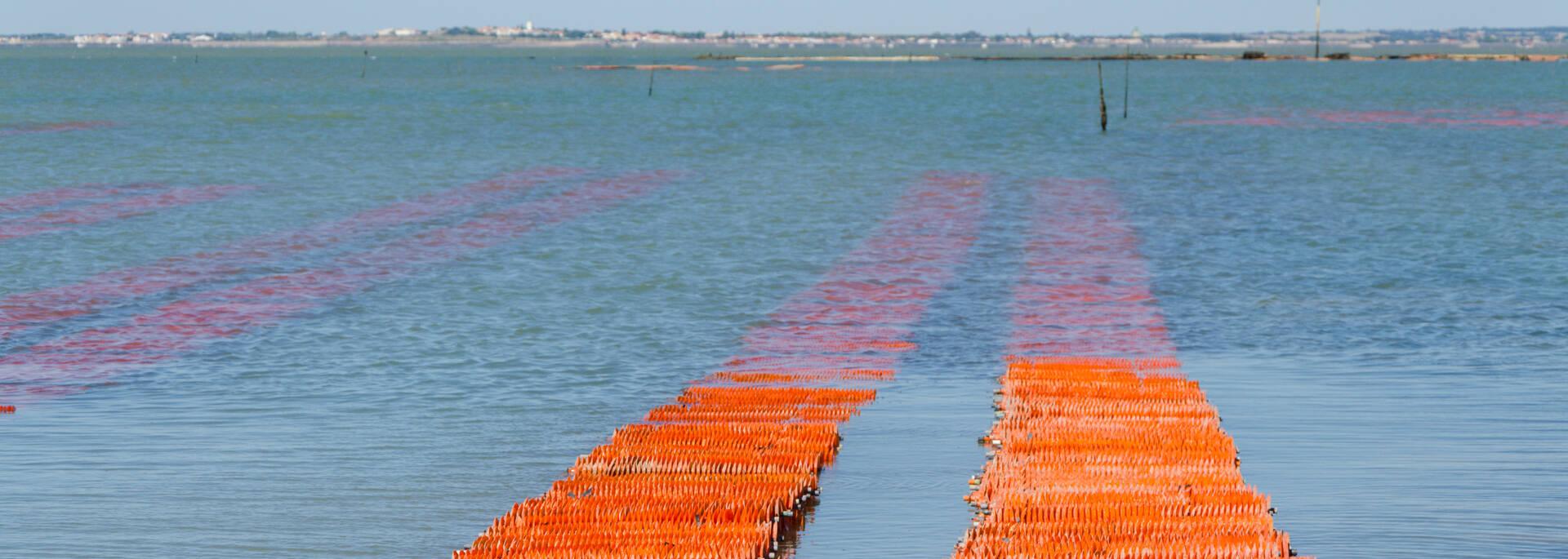 Collecteurs d'huîtres sur table, visibles à marée basse à Fouras  - © Dfred Photographie