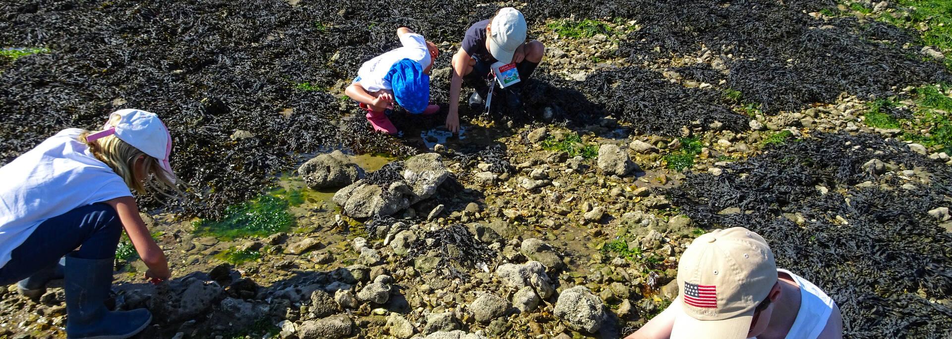 Les enfants cherchent des crabes à Port-des-Barques - © Écomusée de Port des Barques