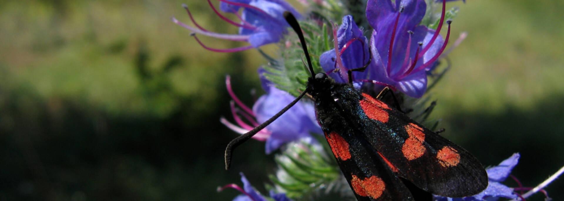 Focus sur la nature  : fleurs et insectes à la réserve naturelle d'Yves - © Réserve Naturelle du Maraus d'Yves