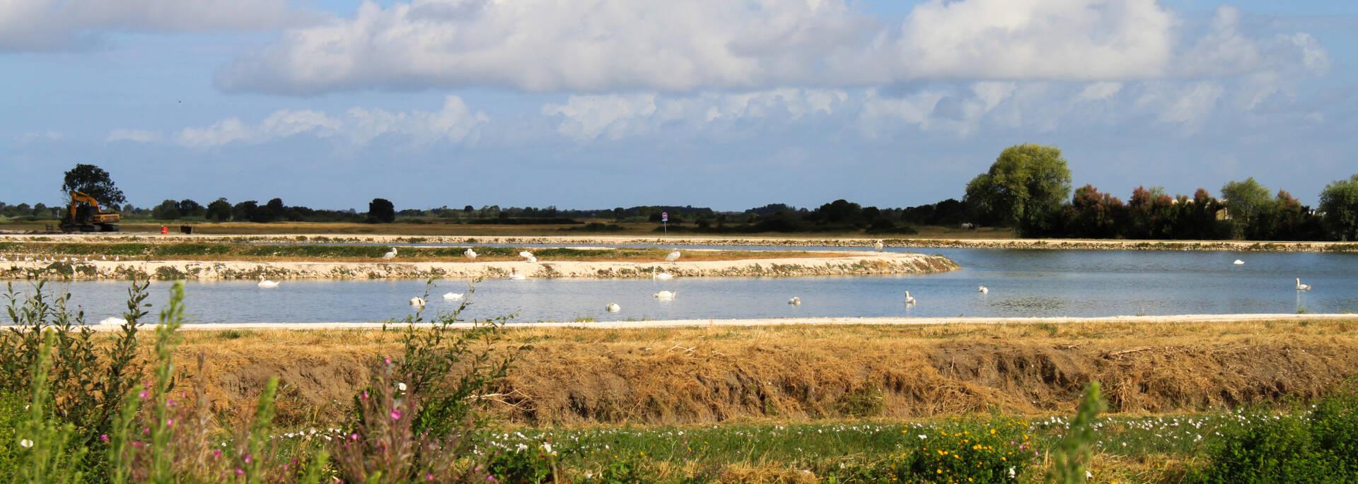 Les sorties nature rochefort oc an office de tourisme de rochefort oc an vacances - Office de tourisme rochefort ocean ...