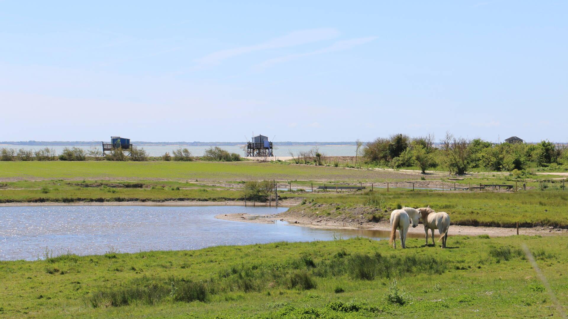 Balade à l'île Madame - Rochefort Océan