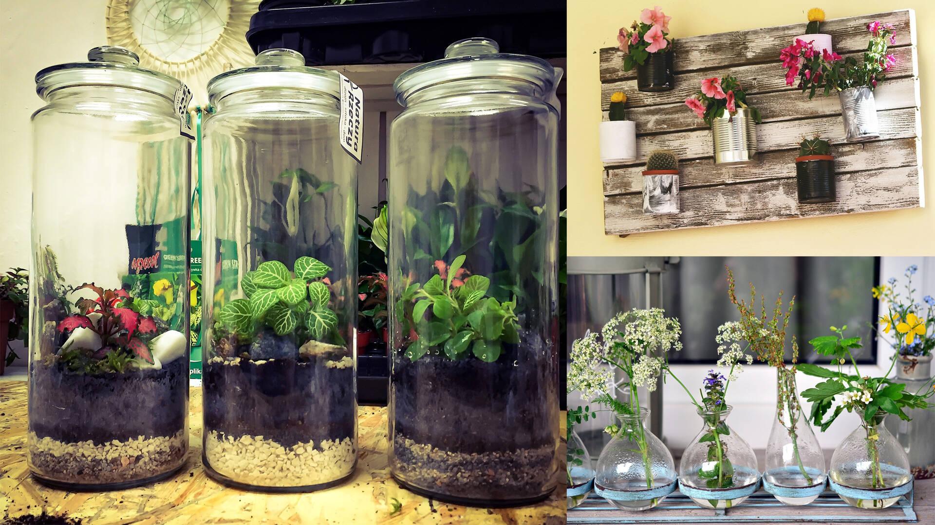 Plantes dans bocaux en verre ©Pixabay