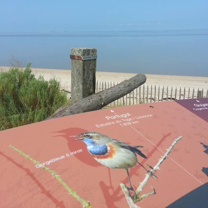 Sortie nature à la Réserve naturelle de Moëze - Rochefort Océan