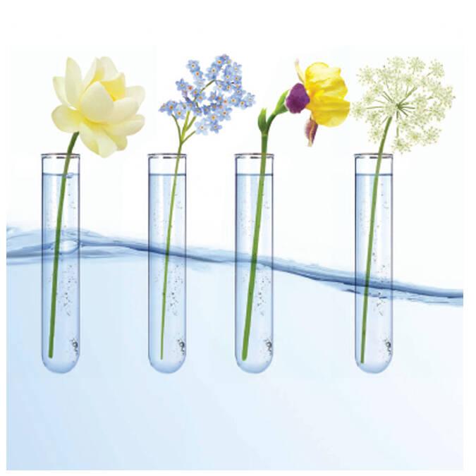 Fleurs bio pour la gamme bio La Source® Eau Thermale Rochefort ©Léa Nature