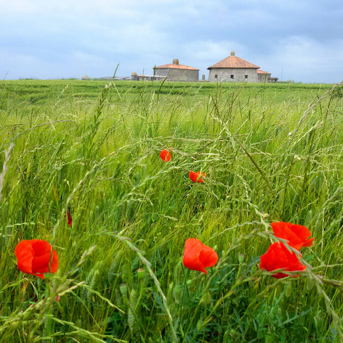 Fort Lupin and its marsh - © Rodrigue Roux