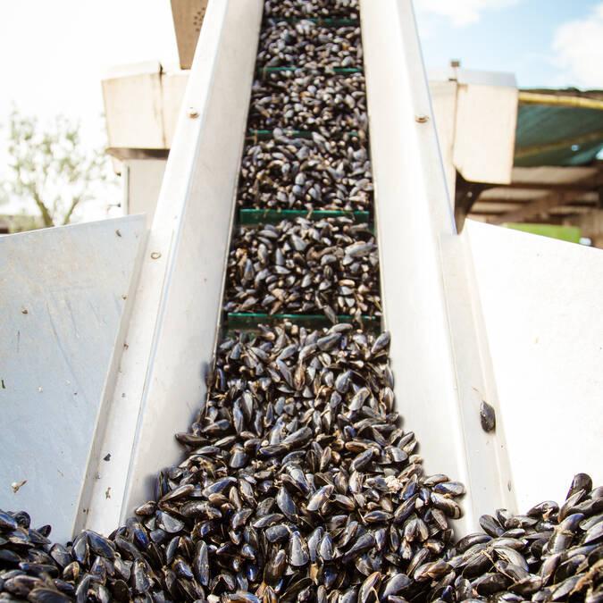 Venez déguster les moules chez Margat à Fouras-les-bains - © Vïven