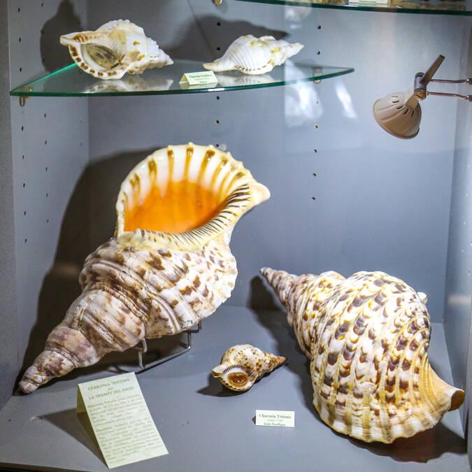 Vitrines illustrative de Musée de la Nacre à l'île d'Aix - © Office de tourisme Rochefort Océan