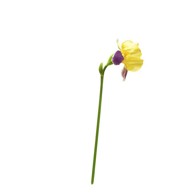 Iris bio pour la gamme bio La Source® Eau Thermale Rochefort ©Léa Nature
