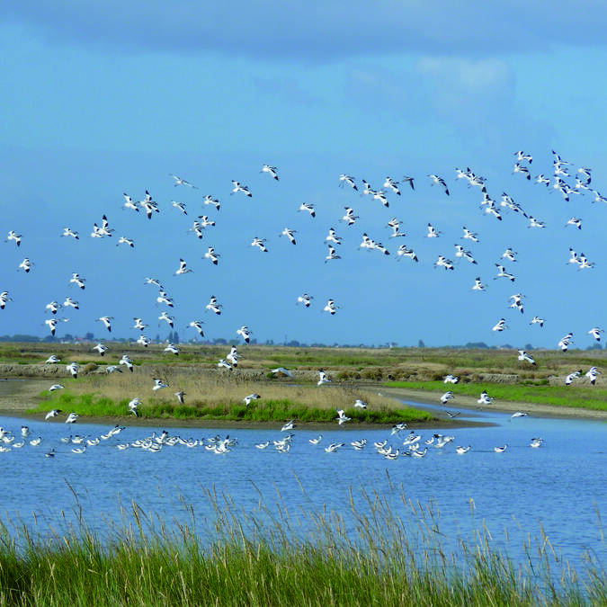 Rochefort Océan, terre d'escale pour les oiseaux migrateurs © CRNNMO