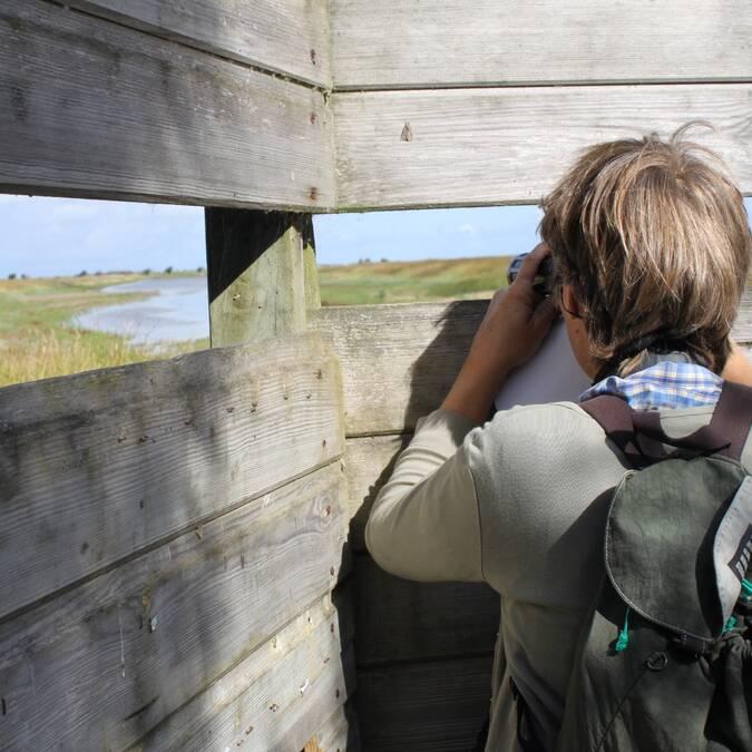 Observation d'oiseaux à Rochefort Océan © Christine Lacaud Office de Tourisme Rochefort Océan
