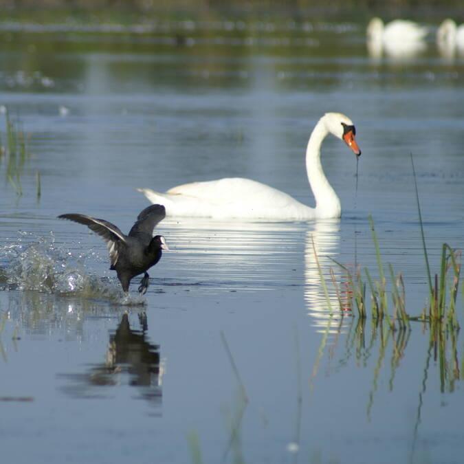 Observation des oiseaux à la réserve naturelle de Moëze-Oléron - © Audrey Destenay