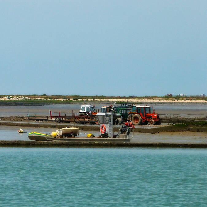 Ostréiculteurs à Port-des-Barques - © Office de tourisme Rochefort Océan