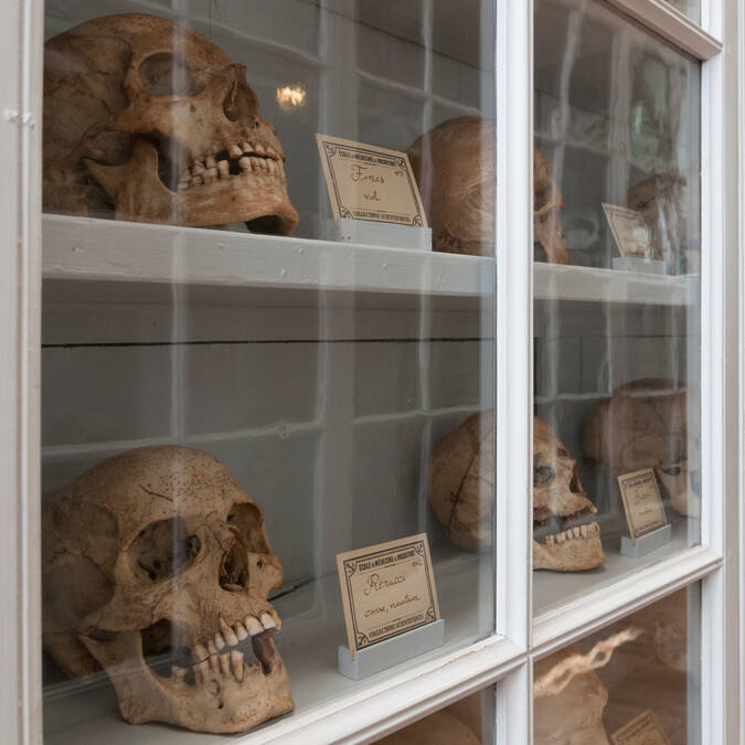 Collection of anatomy in the School of Naval Medicine - © Vincent Edwell