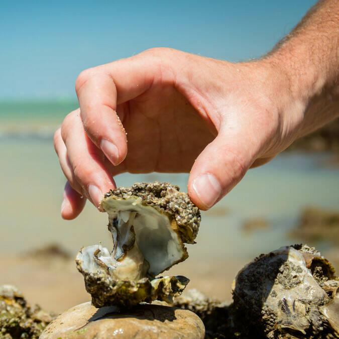 Dégustation sans modération des huîtres de Charente Maritime qui naissent à Rochefort Océan - © Laurent Pétillon