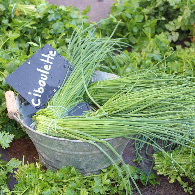 Le marché des quatre saisons à Rochefort, plantes aromatiques, Rochefort Océan